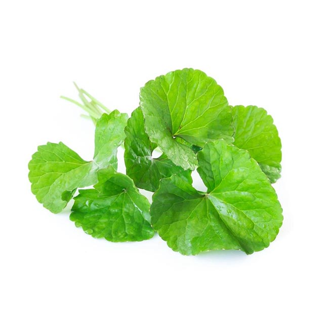 Centella plany leaves