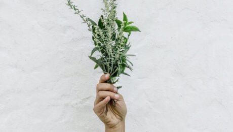Hand holding herbs